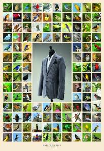 bird A2